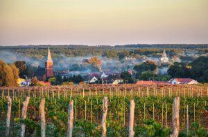 35-hektarowa winnica w Zaborze k. Zielonej Góry w promieniach zachodzącego słońca