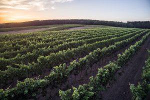 największa winnica w Polsce