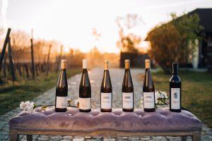 Wina z Winnicy Stara Winna Góra w promieniach zachodzącego słońca