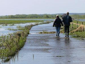Osoby spacerujące po Parku Narodowym Ujście Warty