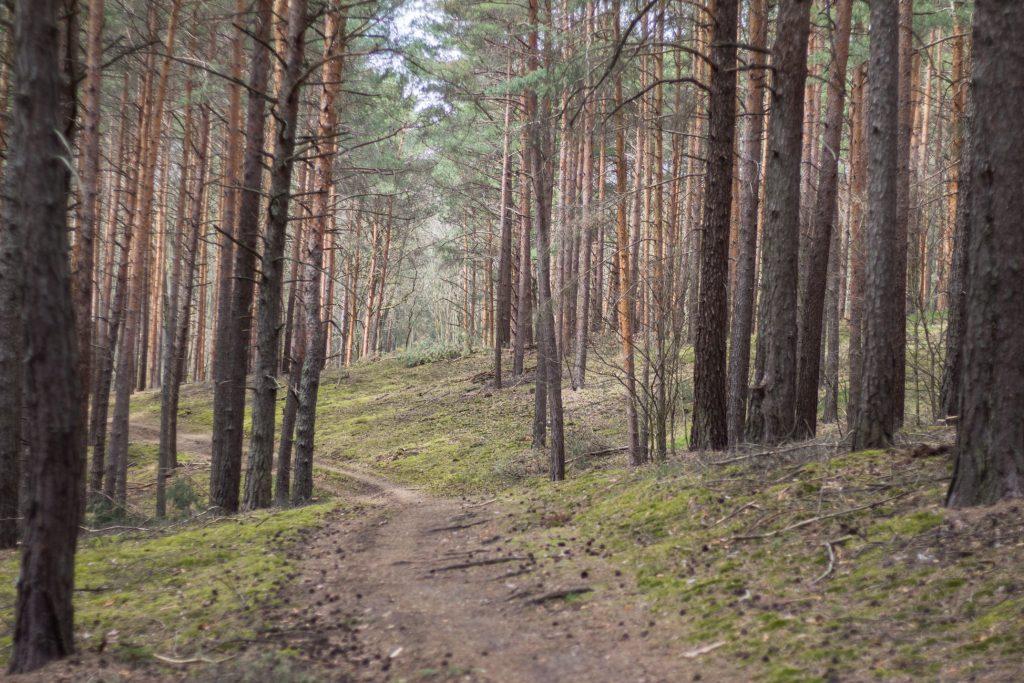 Trasy nordic walking Zielona Góra