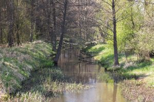 Rzeka Śląska Ochla w okolicach Kiełpina